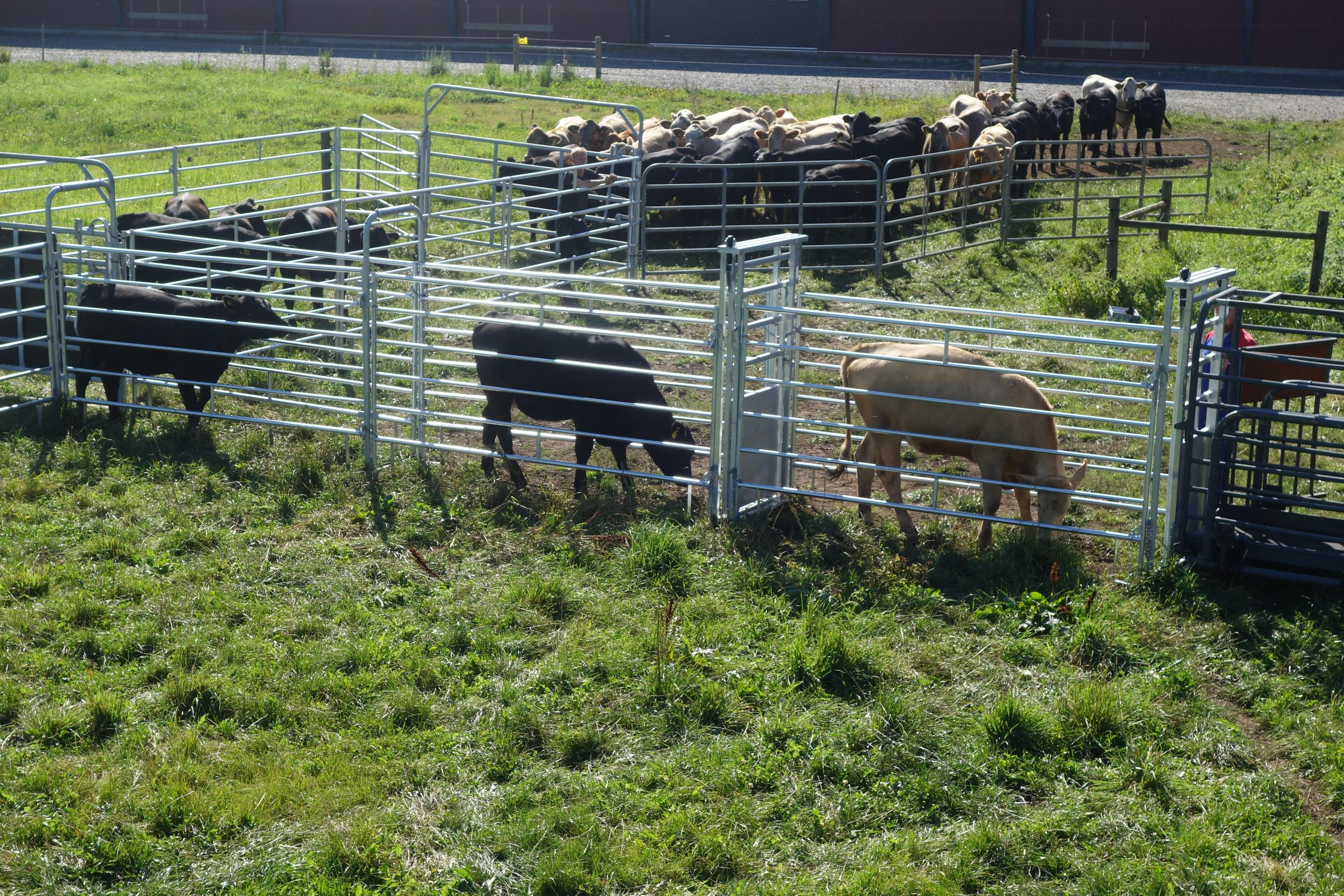 Cattle and alley gates