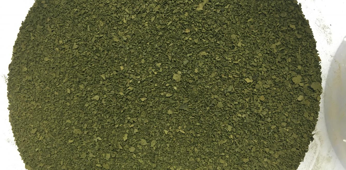 Dried protein extracted from forage