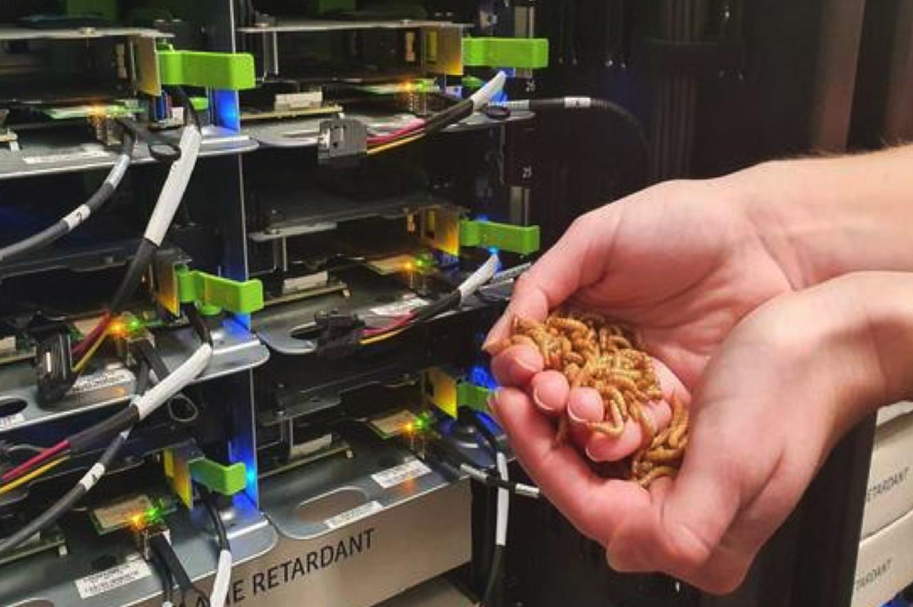 Heat re-use datacenter greenhouse ICE research Elsevier mealworm